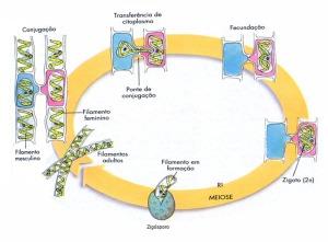 espirgira-ciclo700