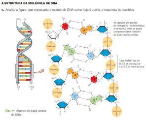 DNA- estrutura