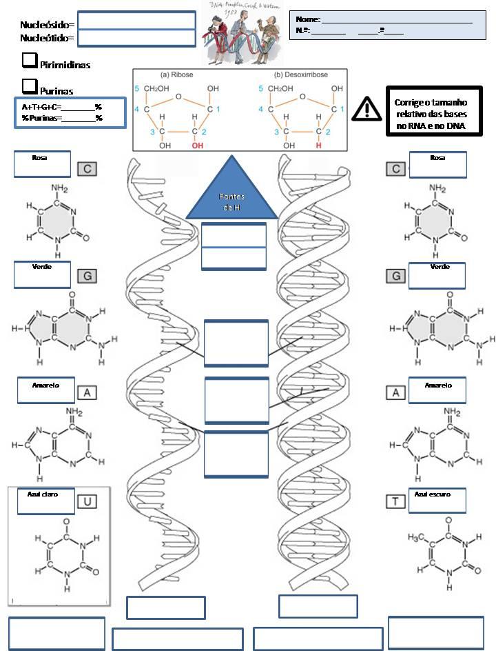 FT_10_DNA RNA_MAIS ATUAL