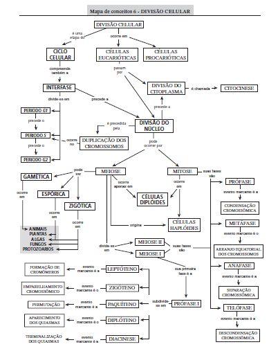 Mapa conceitos_ mitose_meiose_ciclos de vida