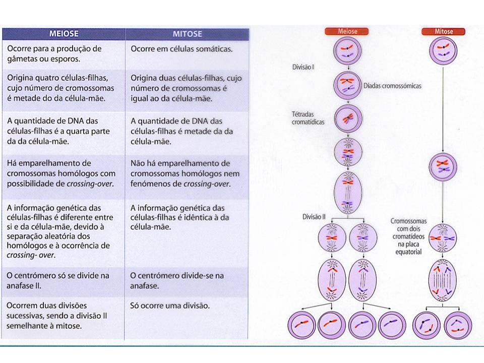 mitose _meiose-quadro resumo