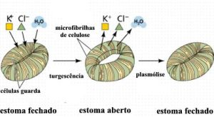 estomapotassio