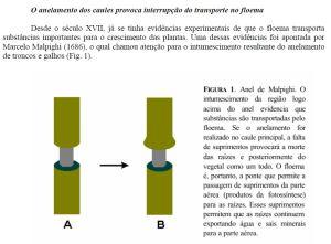 Floema-anelamento