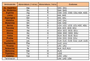 Tabla aminoacidos