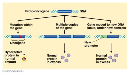 mutação protooncogene