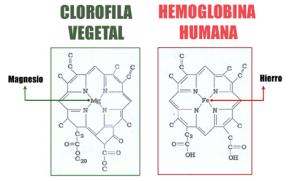 hemoglobina clrofila