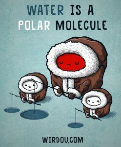agua polar